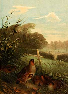 chromolithograph wildlife