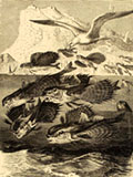 lithograph animal prints